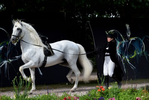 Dressage du cheval par Jacob Sylvie